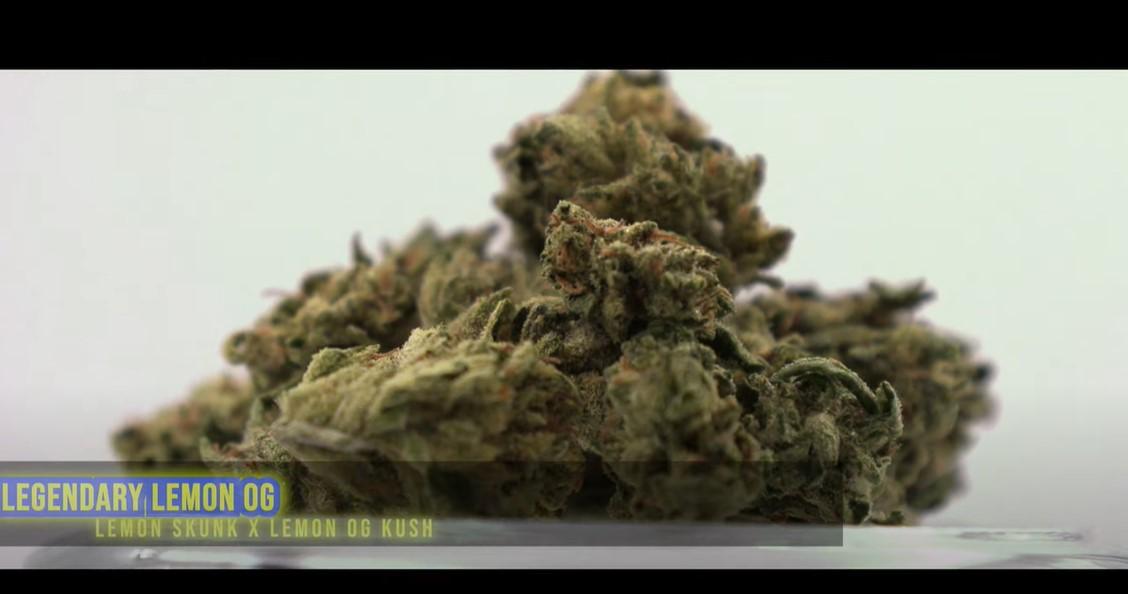 Legendary Lemon OG Bay Broccoli Video Preview 2